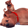 Sims-4-chats-chiens-cats-dogs-addon-pack-extansion-render-png-transparent-04.png