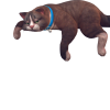 Sims-4-chats-chiens-cats-dogs-addon-pack-extansion-render-png-transparent-06.png