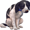 Sims-4-chats-chiens-cats-dogs-addon-pack-extansion-render-png-transparent-13.png