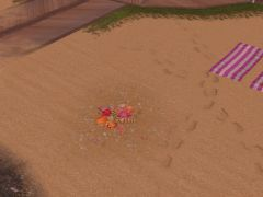 Sims Gratuit freeplay coquillages 04
