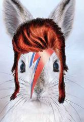 Bowie lapin miniature