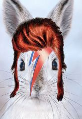 Bowie lapin