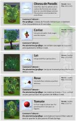 Sims 4 Collections jardinage 3