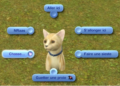 chasse chat 1