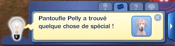 chien chasse message